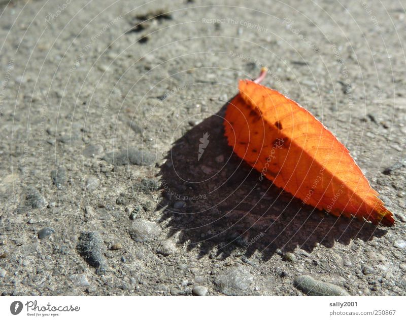 Nature Old Plant Leaf Calm Loneliness Colour Street Autumn Orange Brown Esthetic Natural Transience Sidewalk Beautiful weather