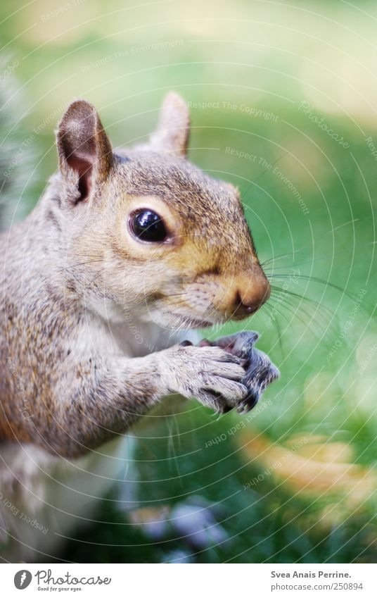 sweeti. Nature Beautiful weather Meadow Animal Wild animal Animal face Pelt Claw Squirrel 1 To hold on Curiosity To feed Colour photo Exterior shot