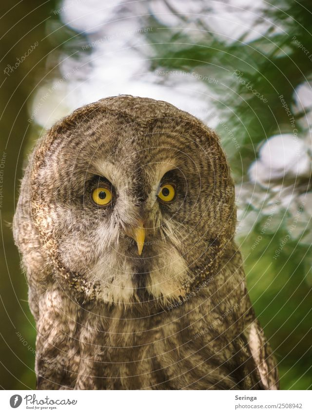 perspicacity Animal Wild animal Bird Animal face Wing Zoo 1 Looking Owl birds Owl eyes waldkautz Eagle owl Colour photo Subdued colour Multicoloured