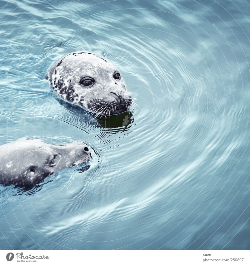 Nature Blue Water Ocean Animal Head Swimming & Bathing Waves Wild animal Wild Pair of animals Cute Observe Curiosity Animal face Float in the water