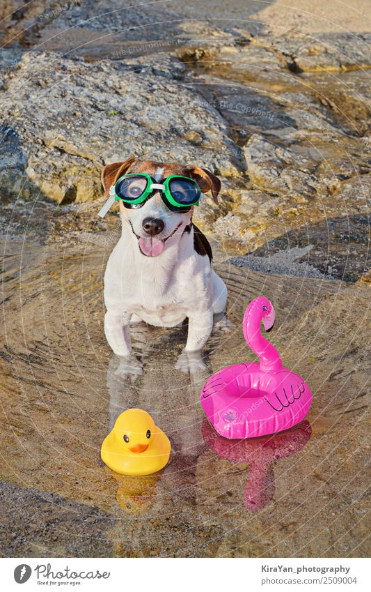 Concept of fun pastime with dog in the summertime Lifestyle Spa Swimming pool Swimming & Bathing Leisure and hobbies Vacation & Travel Adventure Summer