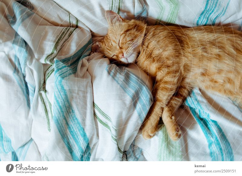 The hangover is too hot Harmonious Well-being Contentment Senses Relaxation Calm Living or residing Flat (apartment) Bed Bedroom Duvet Animal Pet Cat