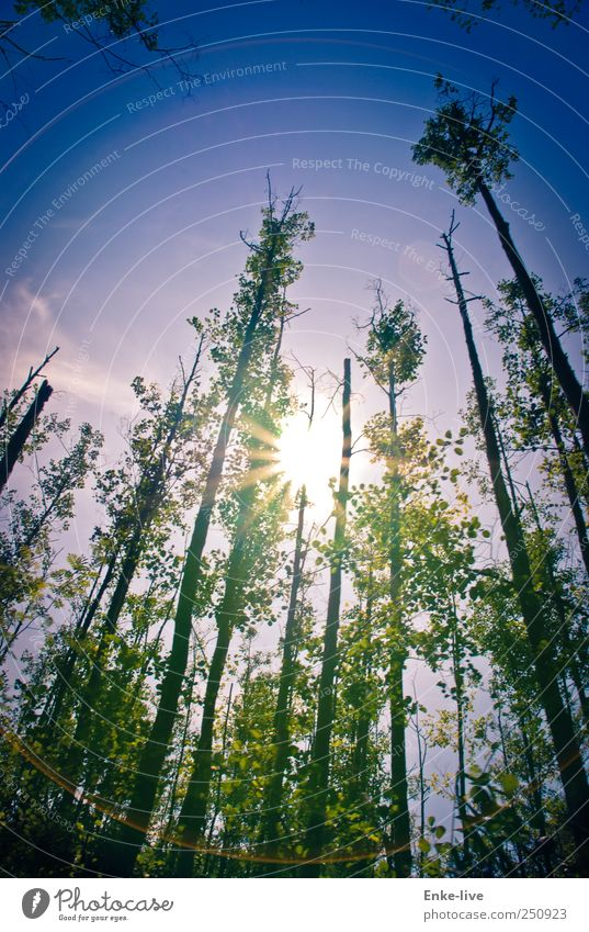 Sky Nature Plant Sun Summer Forest Environment Landscape Freedom Coast Moody Elegant Large Energy Adventure Exceptional