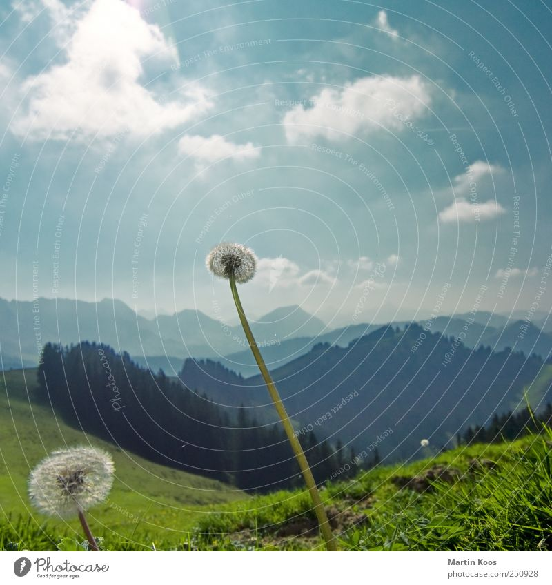 frequent fliers Nature Landscape Plant Weather Beautiful weather Flower Dandelion Meadow Hill Mountain Esthetic Far-off places Fresh Infinity Bright Cold Sky