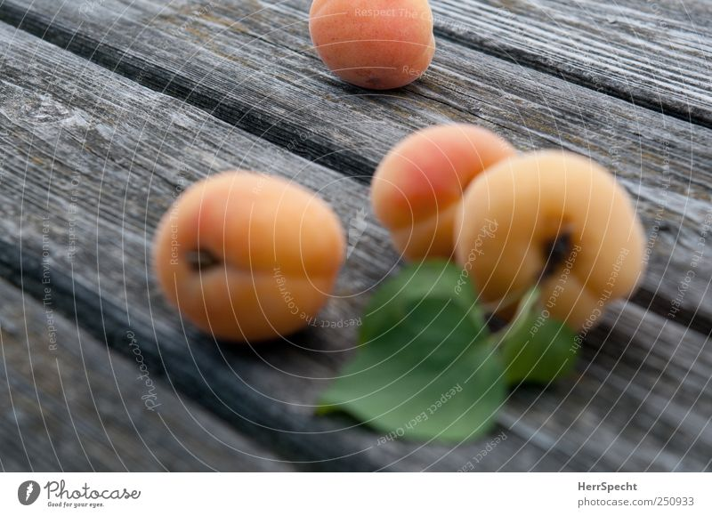 Wood Healthy Fruit Fresh Harvest Apricot