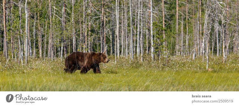 Brown Bear Safari Hunter Science & Research Biology Environment Nature Animal Earth Tree Forest Wild animal Brown bear 1 Love of animals