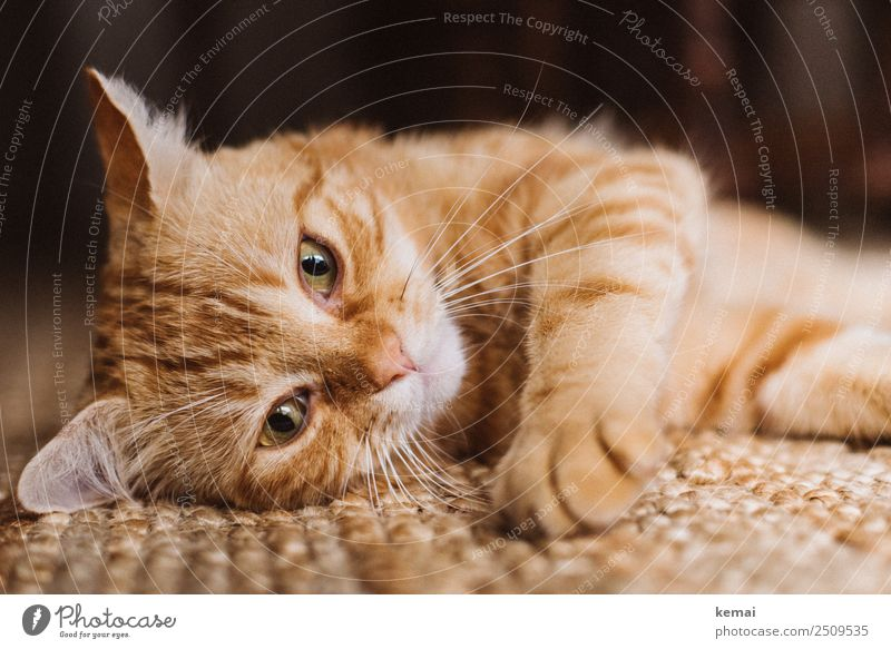 Chilling hangover Harmonious Well-being Contentment Senses Relaxation Calm Leisure and hobbies Living or residing Flat (apartment) Carpet Animal Pet Cat