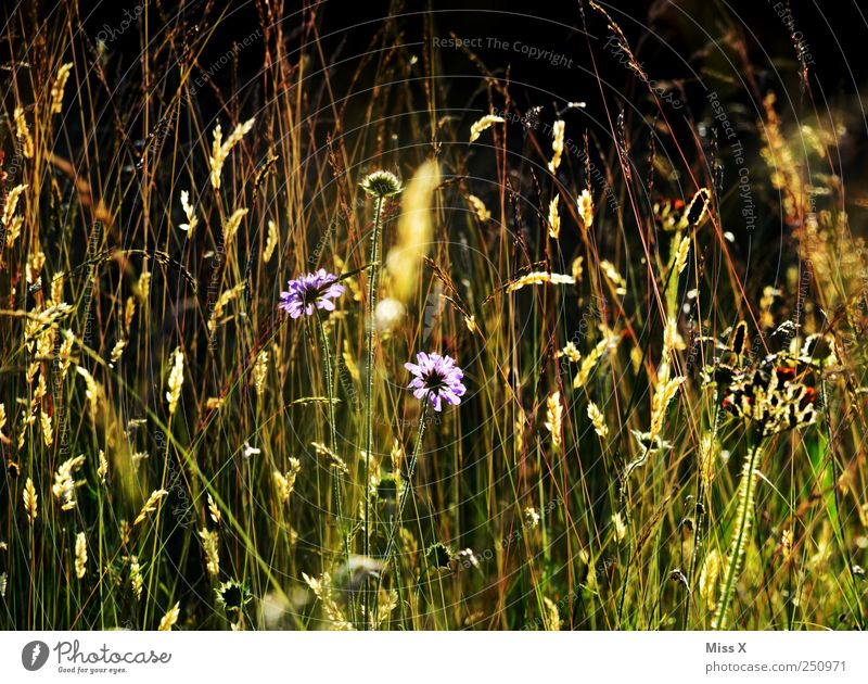 summer meadow Nature Plant Summer Beautiful weather Flower Grass Bushes Leaf Blossom Wild plant Meadow Blossoming Fragrance Illuminate Growth Bright