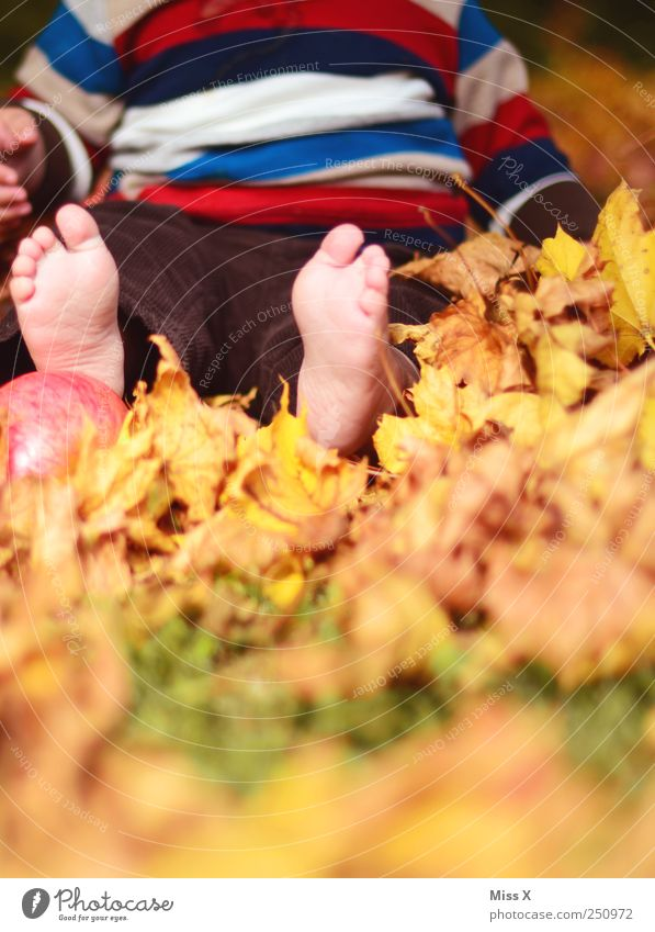 Child Human being Nature Joy Leaf Meadow Autumn Playing Small Feet Infancy Contentment Leisure and hobbies Baby Sit Happiness