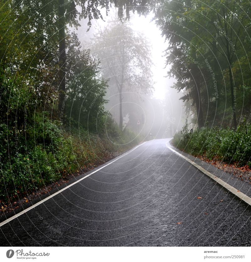 side road Bad weather Fog Rain Forest Transport Traffic infrastructure Street Moody Calm Colour photo Exterior shot Deserted Day