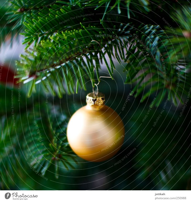 golden ball Decoration Elegant Round Beautiful Gold Green Christmas & Advent Christmas tree Glitter Ball Sphere Hang Fir tree Twigs and branches Fir needle