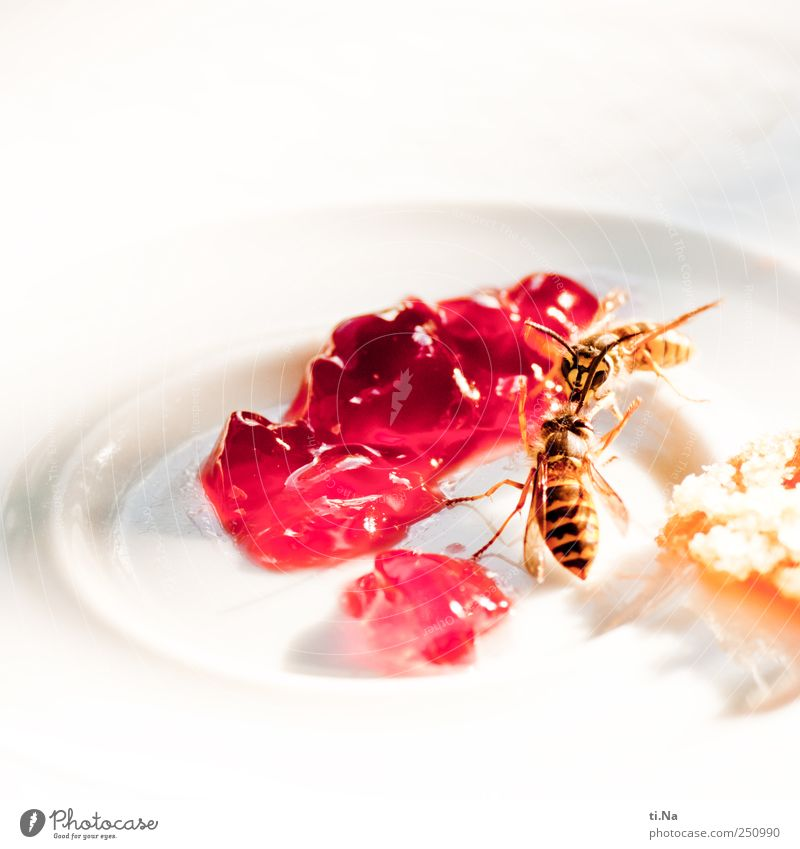 Animal Food Wild animal Plate Breakfast Candy Fight To feed Wasps Jam