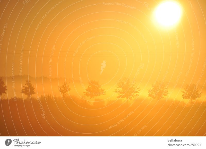 Just before 28 degrees... Nature Plant Sky Cloudless sky Sun Sunrise Sunset Sunlight Autumn Beautiful weather Fog Tree Grass Wild plant Bright Avenue Orange