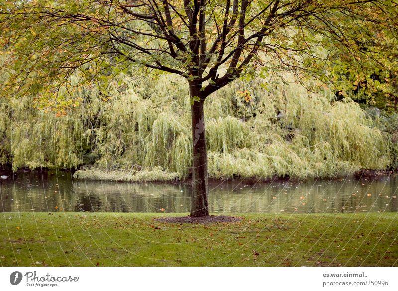 Beautiful Tree Growth Bushes