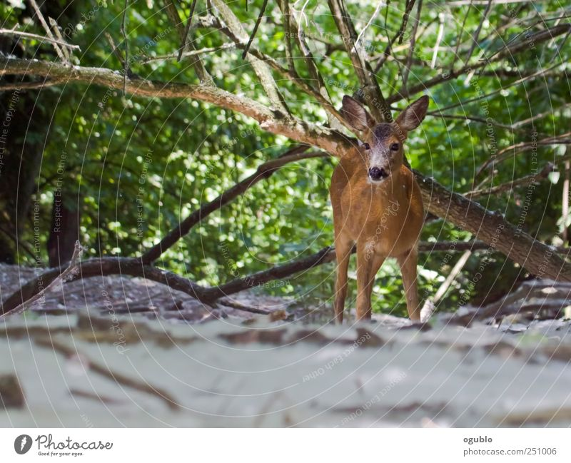 in the woods Nature Tree Animal Strange Gamefowl Bird