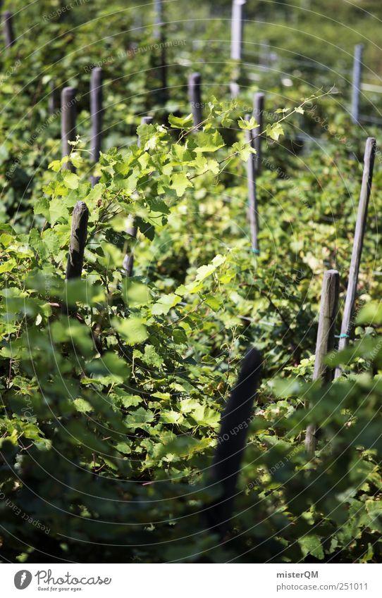 Green cult. Environment Nature Landscape Climate Senses Vine Vineyard Grape harvest Wine growing Italy Mature Slope Plant Colour photo Subdued colour
