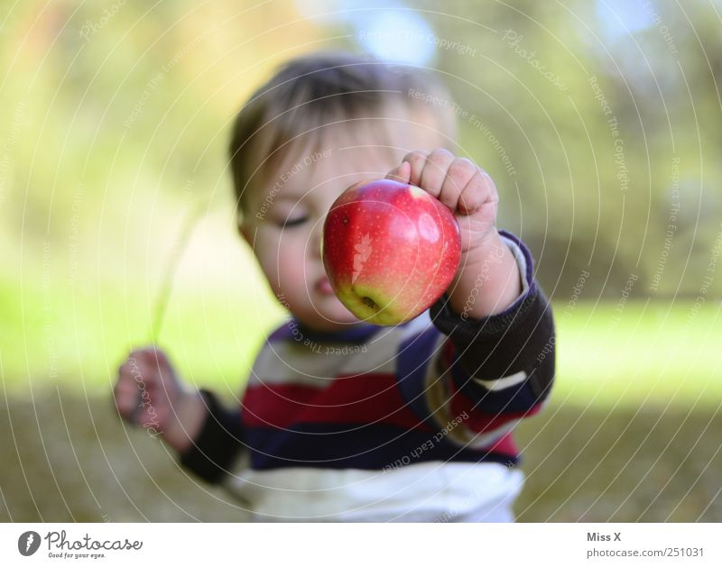 Child Human being Red Nutrition Garden Food Healthy Infancy Baby Fruit Fresh Sweet Apple Toddler Harvest Healthy Eating