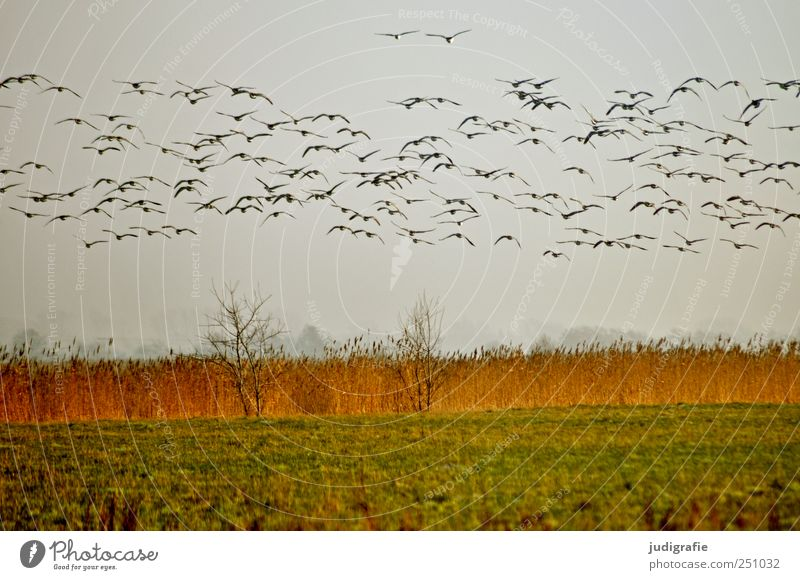 Sky Nature Plant Animal Meadow Environment Landscape Grass Coast Bird Flying Beginning Wild Natural Wild animal Group of animals