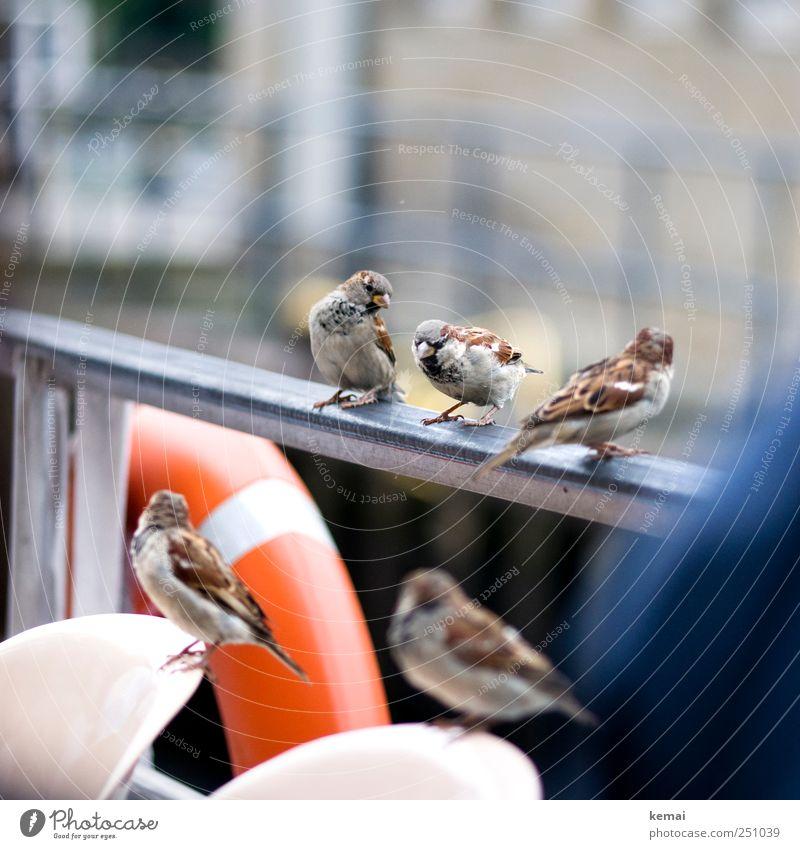 Animal Environment Friendship Bird Together Sit Masculine Natural Wild animal Group of animals Cute Wing Curiosity Handrail Navigation Beak