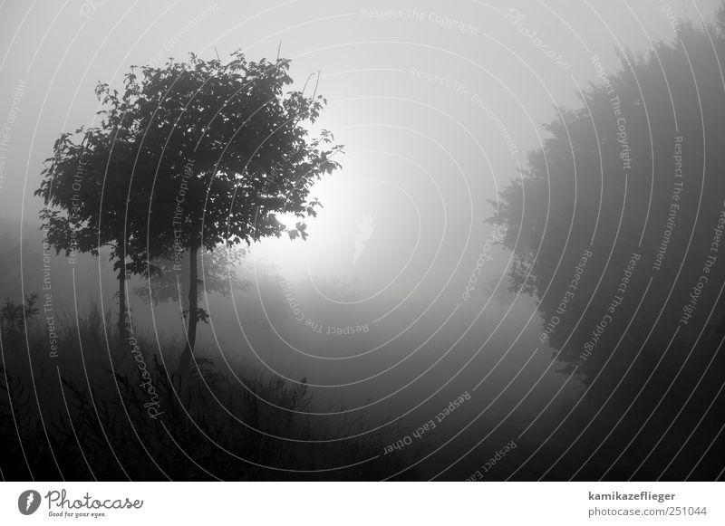 Nature Tree Forest Autumn Environment Landscape Emotions Sadness Moody Fog Longing Bad weather Humble