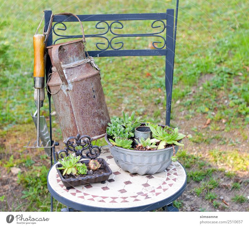 housewort plants as decoration on a chair Leisure and hobbies Garden Plant Blossom Many Difference pots Jug Collection Row mini perennial terakotta Clay pot