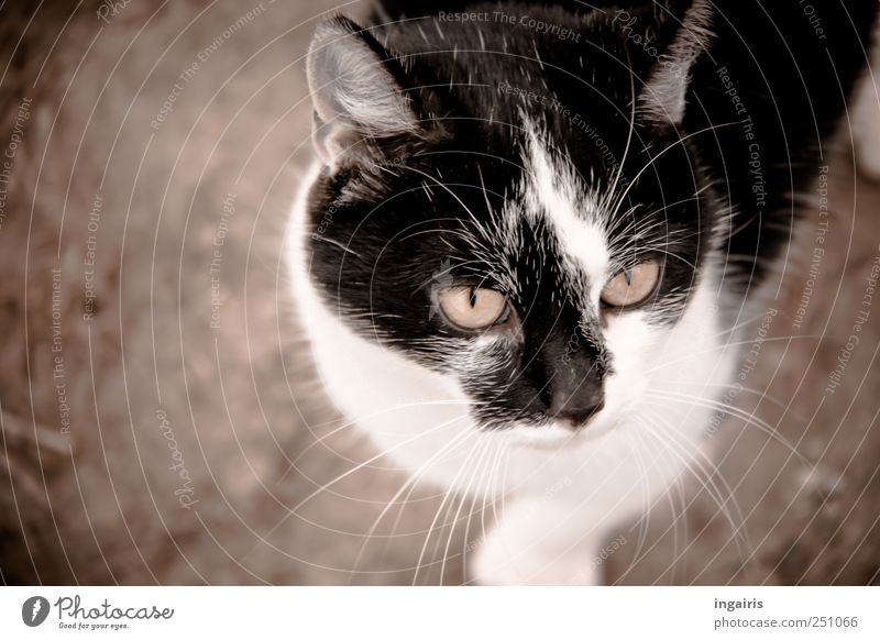 Animal Head Moody Cat Wait Natural Stand Cute Animal face Curiosity Discover Appetite Pet Brash Interest Expectation