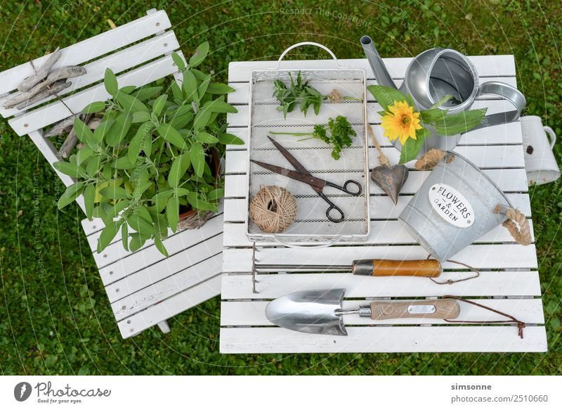 Herbs and garden utensils wood background from above Herbs and spices Well-being Leisure and hobbies Garden Decoration Work and employment Gardening