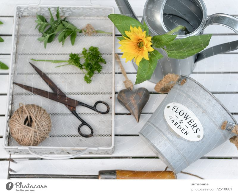 Herbs in the garden with a watering can and scissors white from above Herbs and spices Well-being Leisure and hobbies Garden Decoration Work and employment