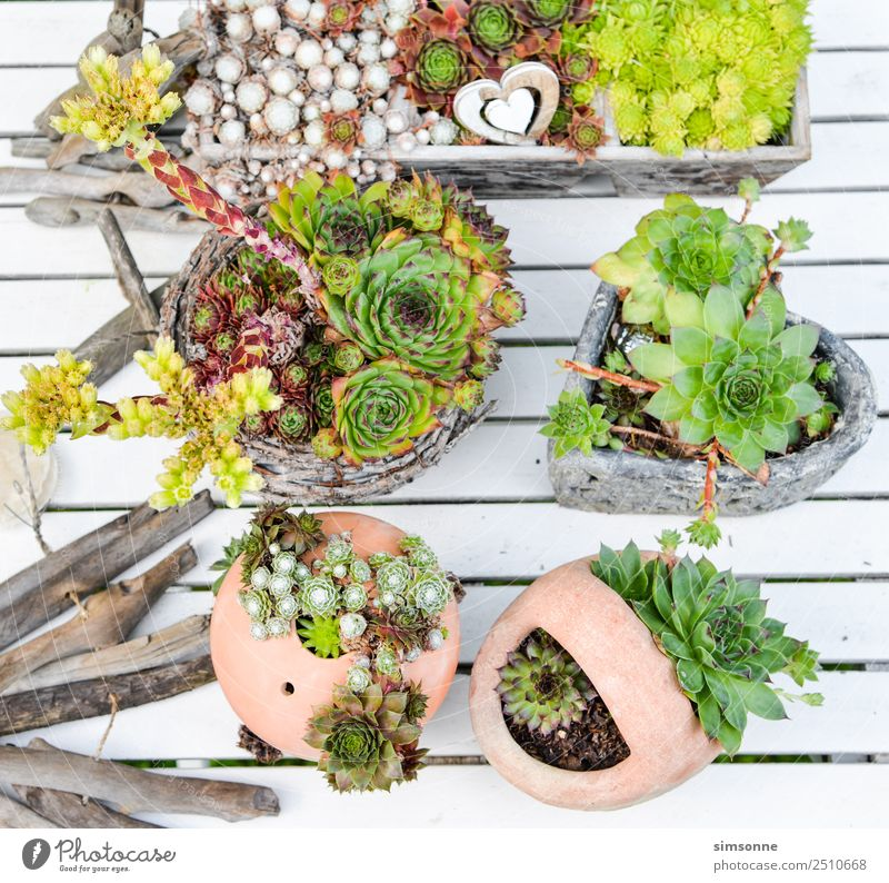 various housewort plants in pots and jugs Leisure and hobbies Garden Plant Blossom Many Difference Jug Collection Row mini perennial terakotta Clay pot