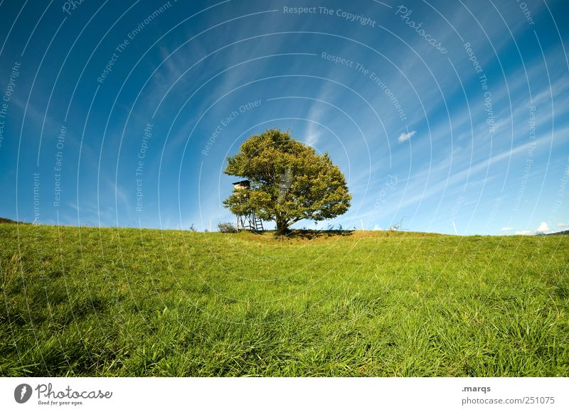 Sky Nature Old Tree Plant Calm Meadow Environment Landscape Time Trip Growth Seasons Tree trunk Beautiful weather Environmental protection