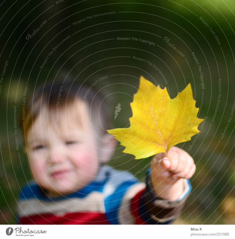 Human being Hand Leaf Face Yellow Autumn Small Infancy Baby Fingers Cute To hold on Toddler Indicate Autumn leaves Find