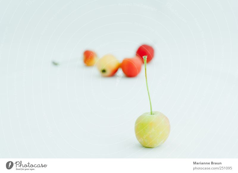 Nature Green Beautiful Red Black Yellow Colour Nutrition Food Small Pink Fruit Wild Sweet Apple Sphere