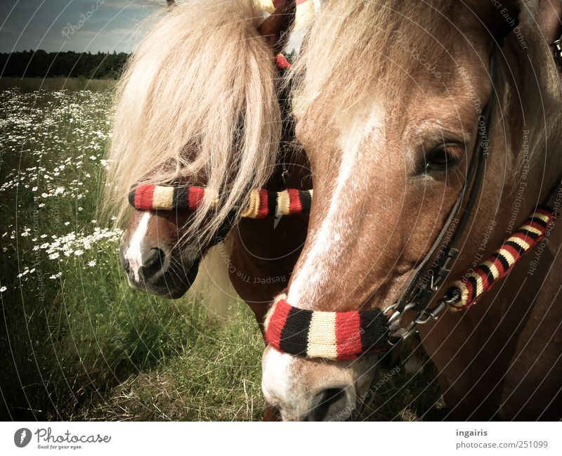 fans Ride Equestrian sports Sporting event Nature Landscape Farm animal Horse 2 Animal Stripe Stand Friendliness Natural Happy Contentment Movement