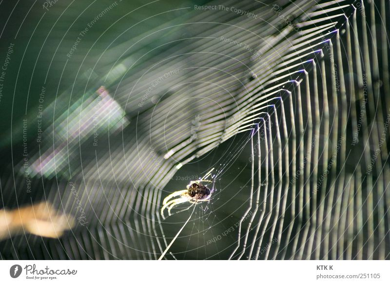 Nature Green Lanes & trails Fear Wait Decoration Construction site Elements Net Hang Trap Captured Geometry Acrobat Spider Crawl