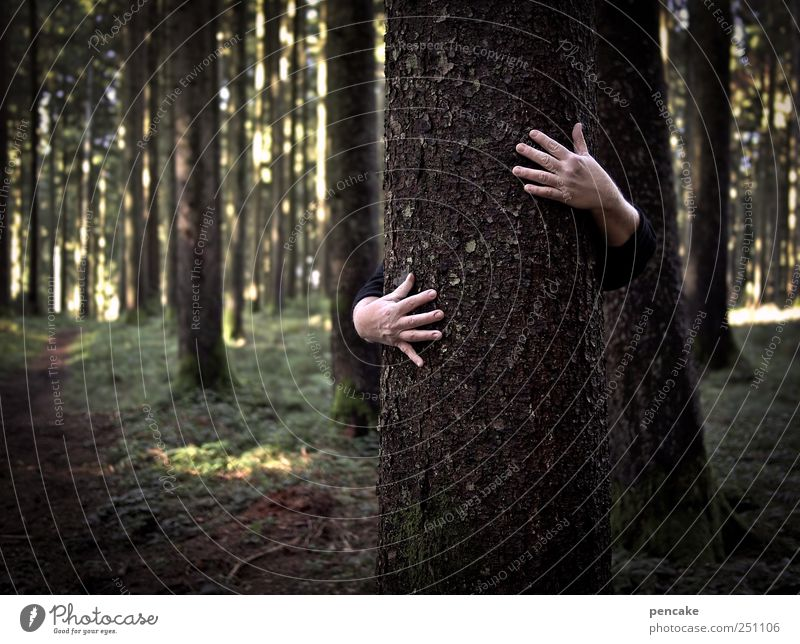 tree friendship Environment Nature Landscape Tree Forest Listening Fight Communicate Looking Hiking Living or residing Authentic Together Good Strong Safety