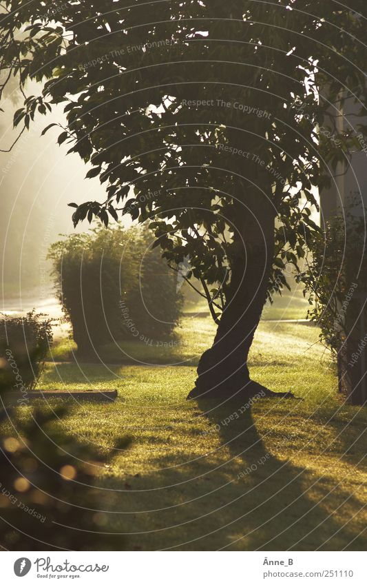 Nature Green Tree Meadow Wood Gold Fog Growth Stand Bushes Change Illuminate Sign Sculpture Breathe Shadow play