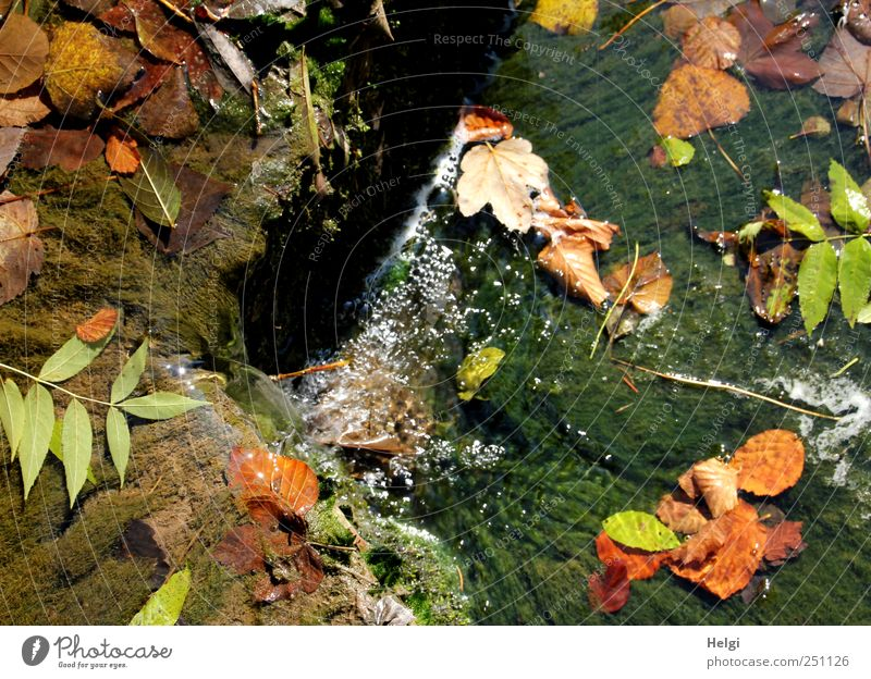 Chamansülz colorful fall... Environment Nature Landscape Plant Water Autumn Beautiful weather Moss Leaf Foliage plant Wild plant Rock Mountain Black Forest