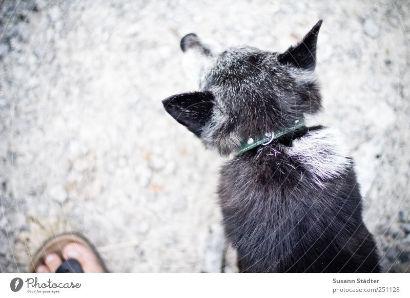 Old Animal Gray Dog Small Feet Friendship Footwear Leisure and hobbies Wait Observe Listening Watchfulness Pet Gravel Male senior