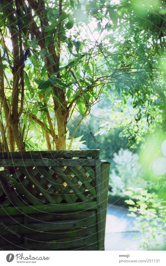 garden Environment Summer Beautiful weather Plant Tree Bushes Garden Natural Green Fence Screening Colour photo Exterior shot Deserted Day Light