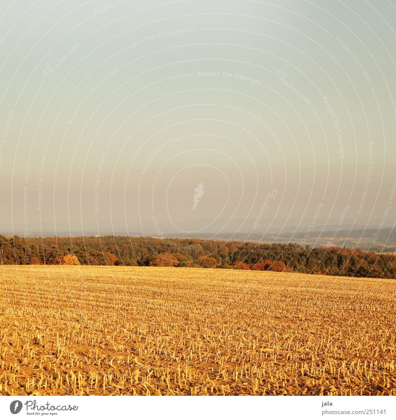 Sky Nature Tree Plant Forest Autumn Environment Landscape Grass Field Gold Natural Agricultural crop Wild plant