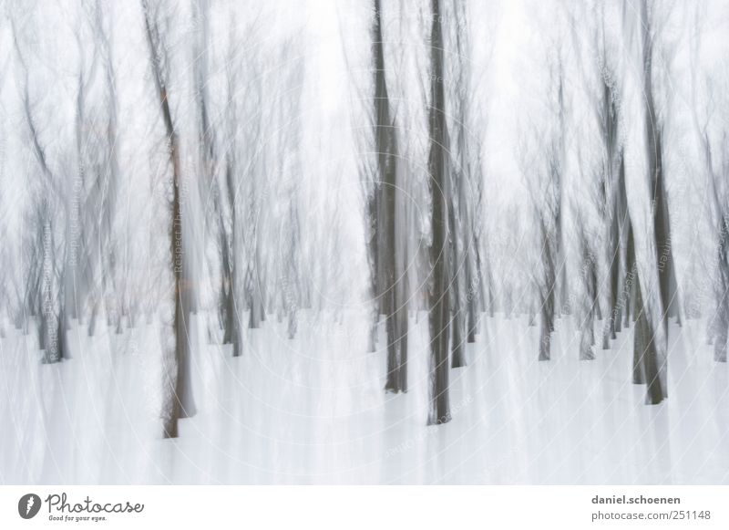 Nature White Winter Forest Snow Environment Gray Movement Ice Wind Frost Black Forest
