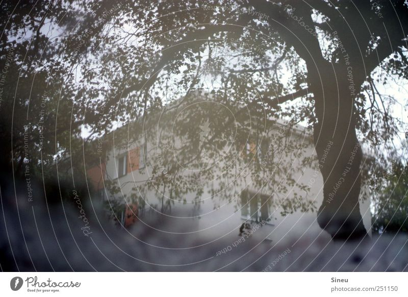 Tree Leaf House (Residential Structure) Gray Wet Puddle Branchage Section of image Partially visible Dreary Mirror image Surface of water