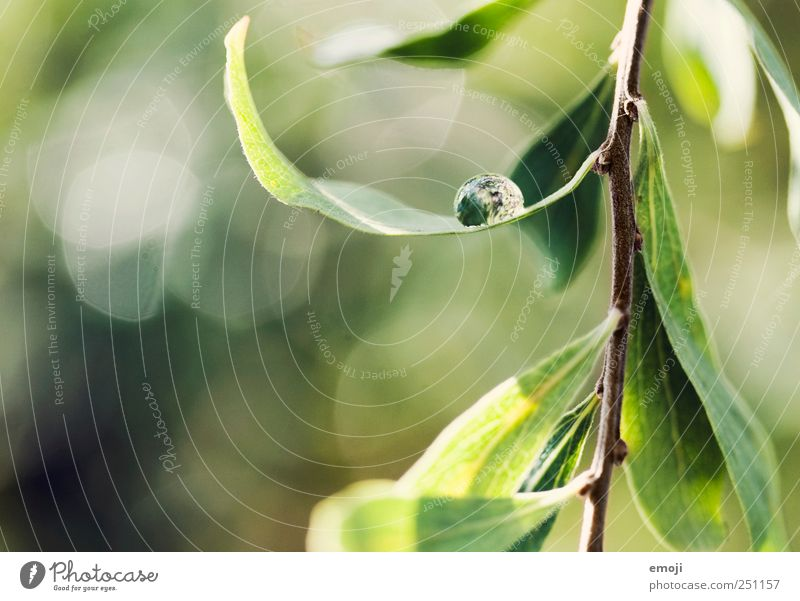 Nature Green Plant Leaf Environment Spring Glittering Drops of water Fresh Natural Bushes Beautiful weather Foliage plant