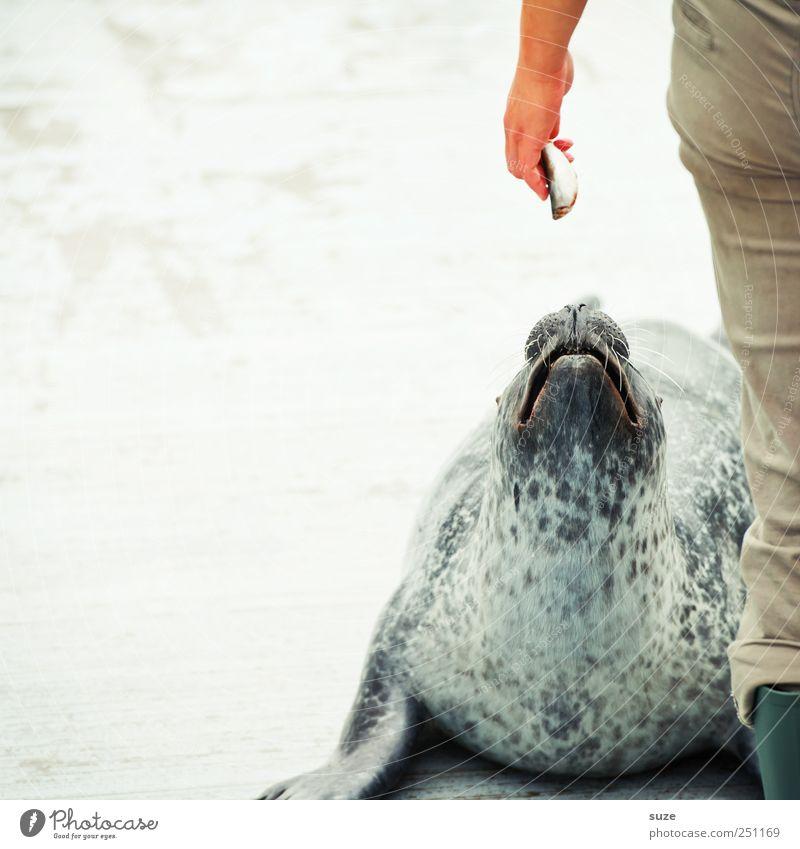 Human being Hand Animal Head Legs Funny Wild animal Wait Lie Fish Cute Curiosity Animal face Rescue Feeding