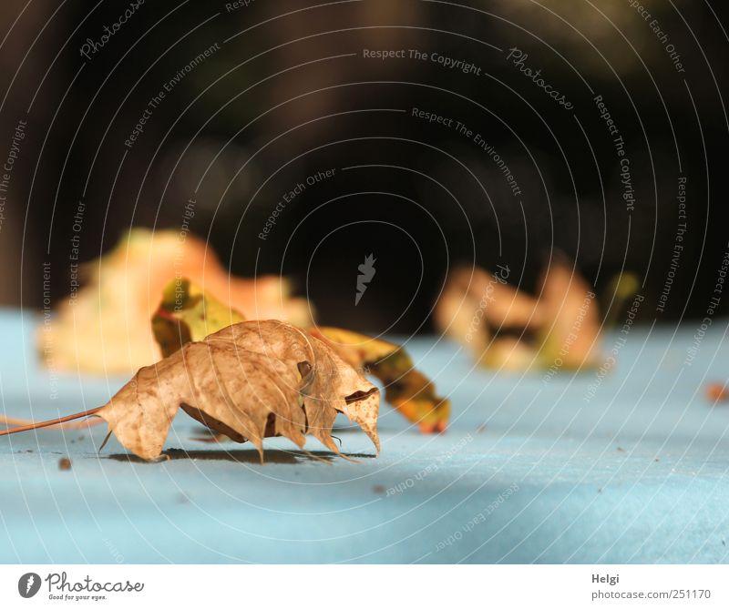 Nature Blue Plant Leaf Calm Loneliness Black Life Autumn Environment Moody Brown Lie Esthetic Natural Authentic