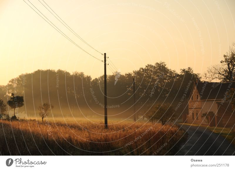 petal Nature Landscape Sky Cloudless sky Sunrise Sunset Autumn Beautiful weather Fog Tree Grass Bushes Field Pasture Germany Village