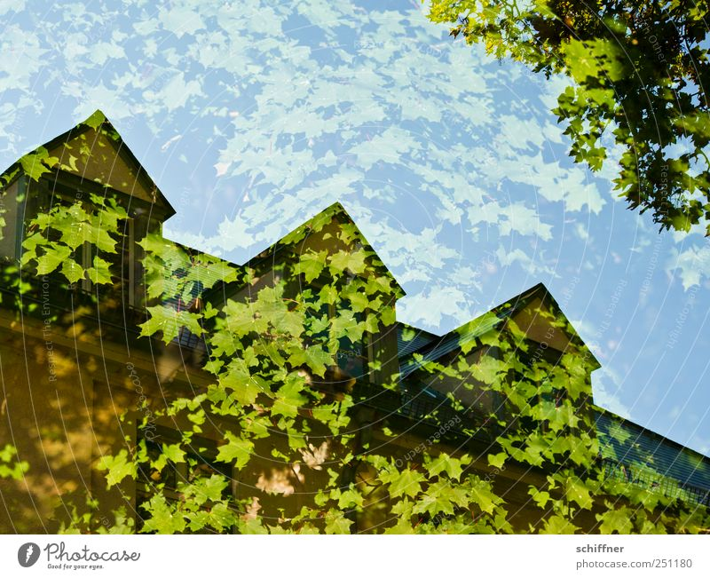 Green Tree Leaf House (Residential Structure) Window Building Roof Manmade structures Double exposure Ecological Maple tree Foliage plant Maple leaf Leaf canopy