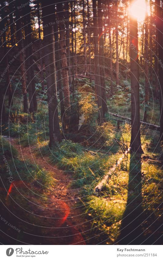 ° Vacation & Travel Trip Freedom Summer vacation Hiking Nature Plant Beautiful weather Tree Grass Bushes Pine Forest Lanes & trails Breathe Relaxation Esthetic