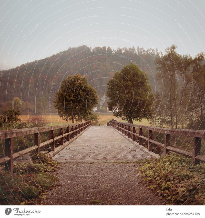 Nature Tree Plant Environment Landscape Grass Natural Bridge Bushes Manmade structures Foliage plant Wild plant