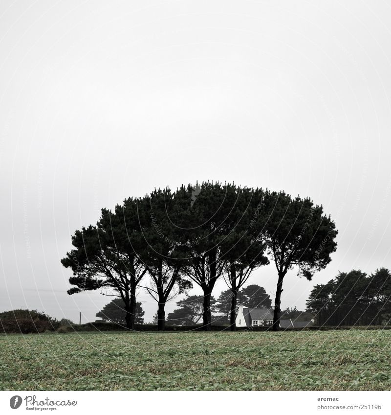 weather protection Nature Landscape Sky Bad weather Tree Field Village Detached house Gloomy Gray Calm France Brittany Colour photo Subdued colour Exterior shot